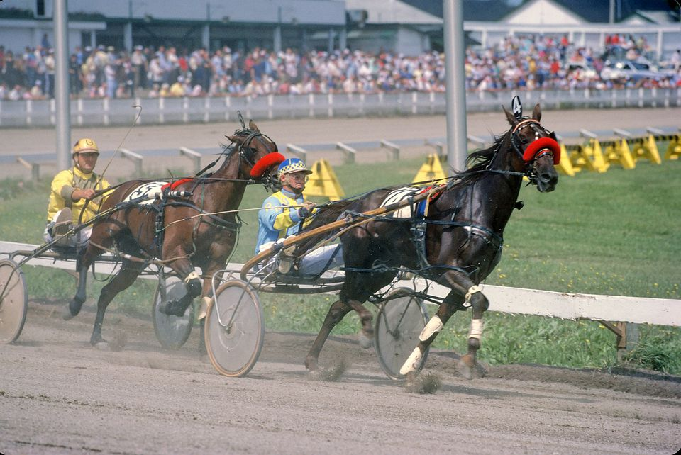 Standardbred racing horses on track.