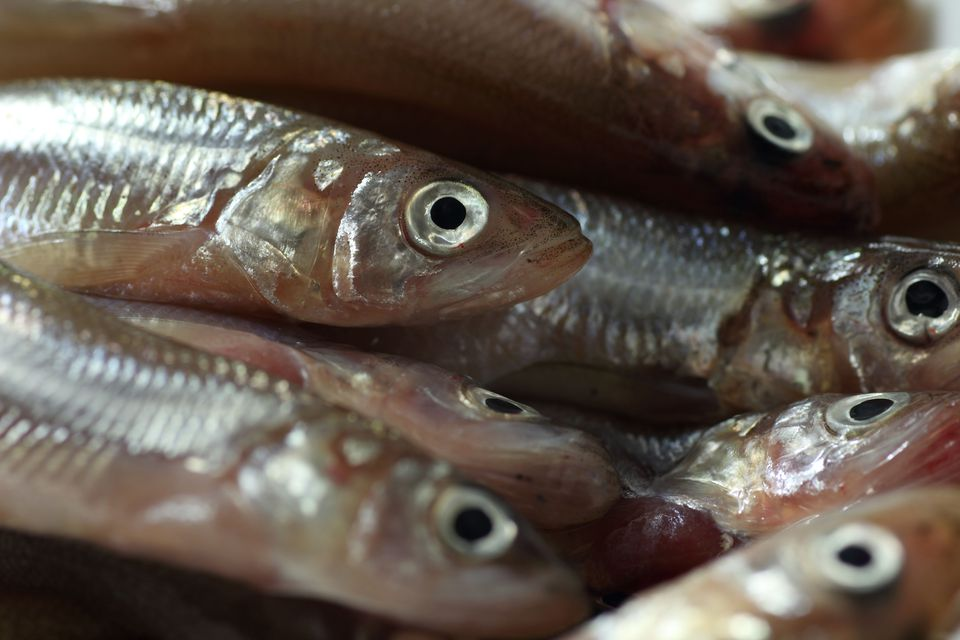 how to cook smelt fish