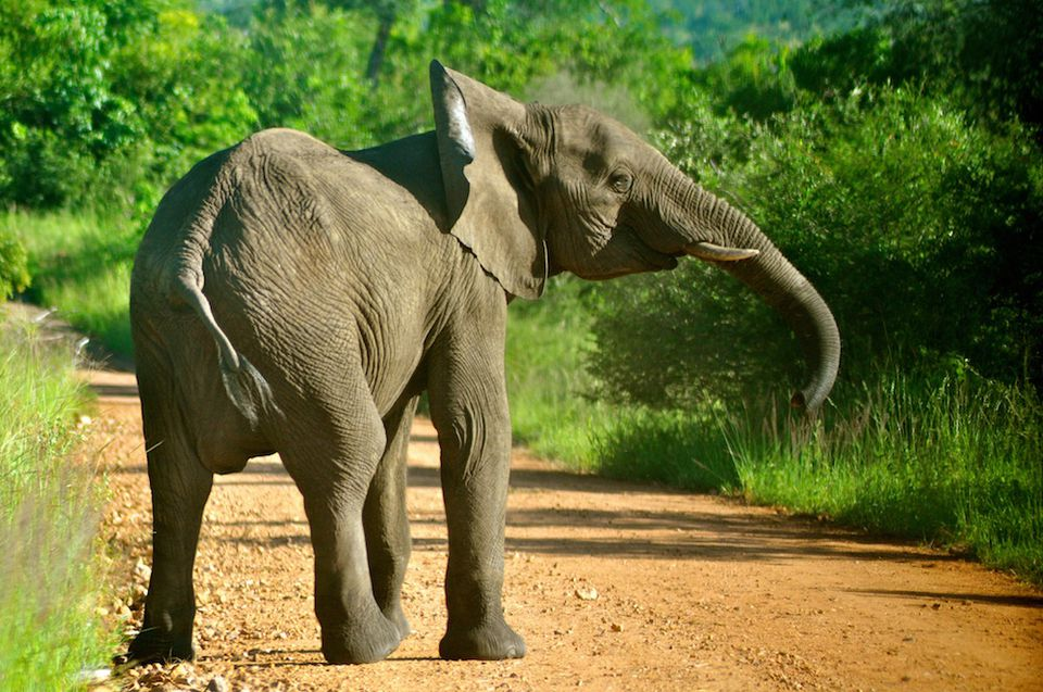an elephant in Africa