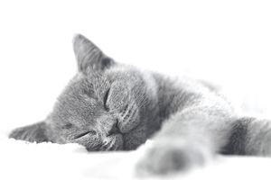 Kitten Sleeping.