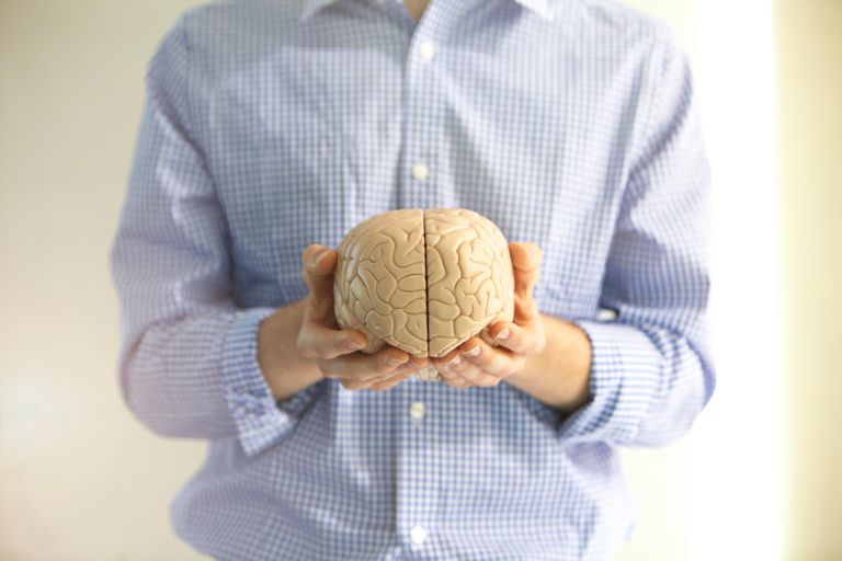 Man holding a model of a brain.
