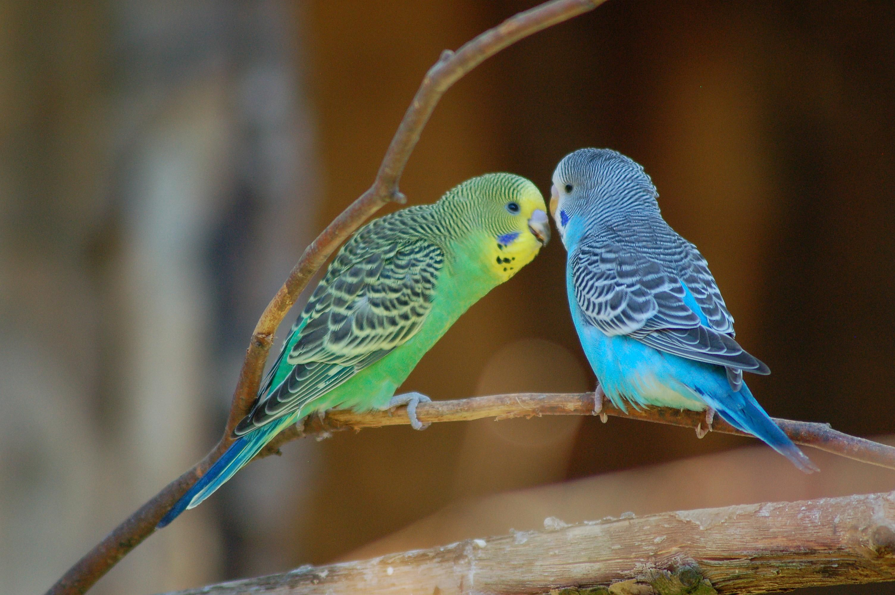 Blue And Green Bathroom Ideas Are Parakeets Parrots Question And Answer