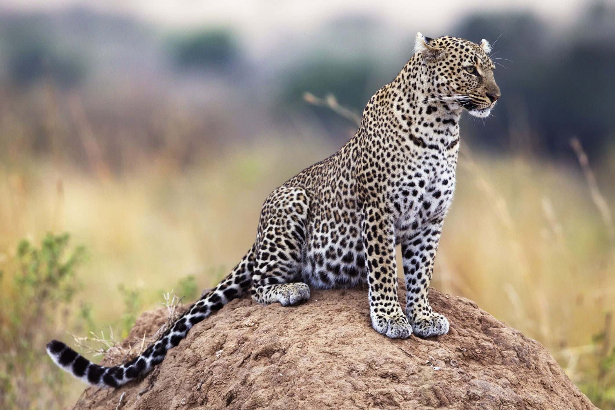 An Introduction to Africa's Big Five Safari Animals