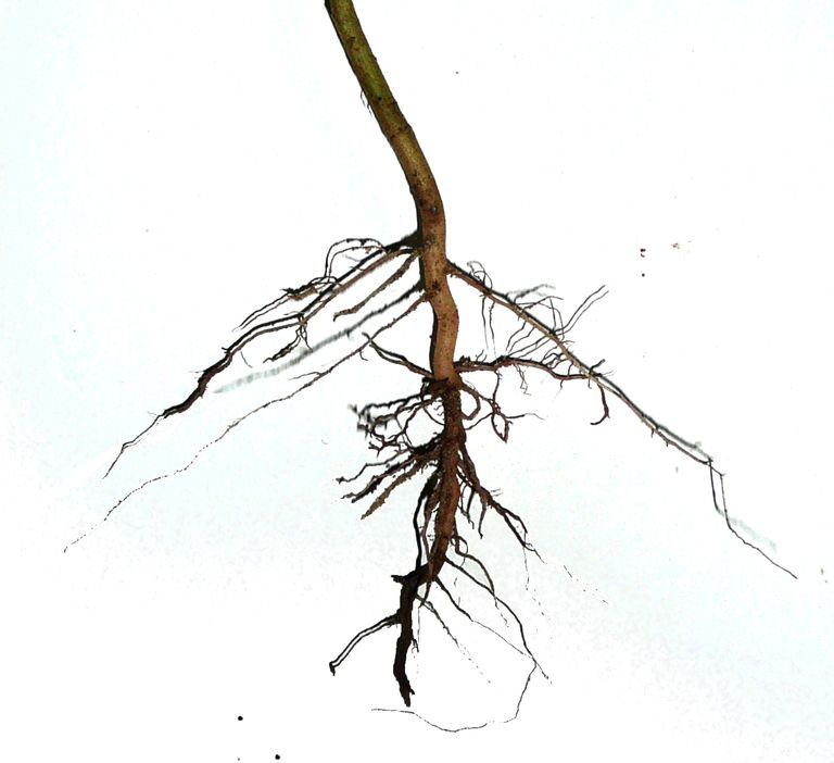 plants roots