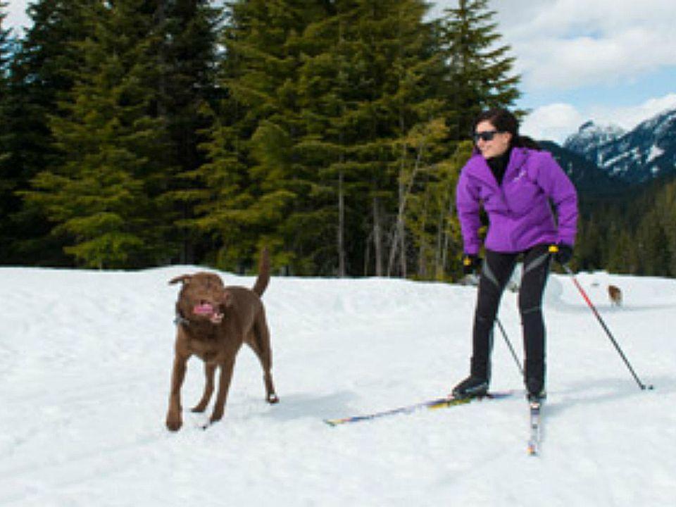 Dog-Friendly Whistler BC