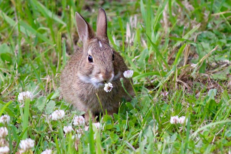 Rabbit On Grassy Field