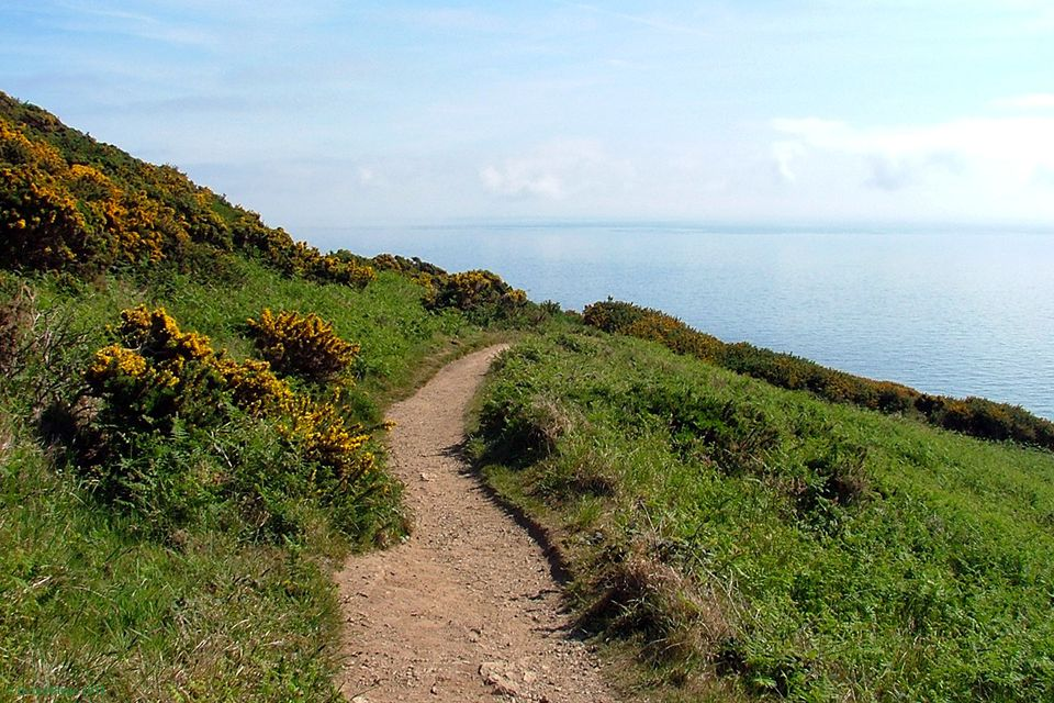 Part of the Howth Cliff Path Loop - rugged, but perfectly safe.
