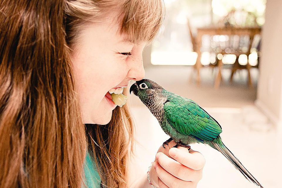 Portrait of giggling redhead girl sharing grape with her turquoise conure.