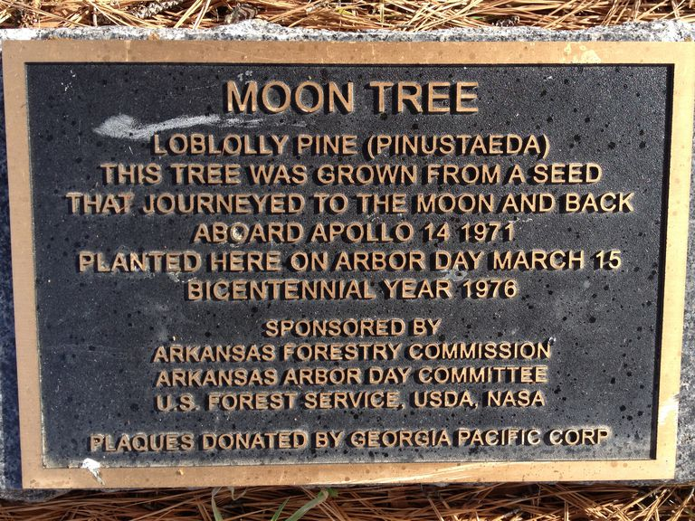 Plaque at the base of the Fort Smith, Arkansas, Moon Tree.
