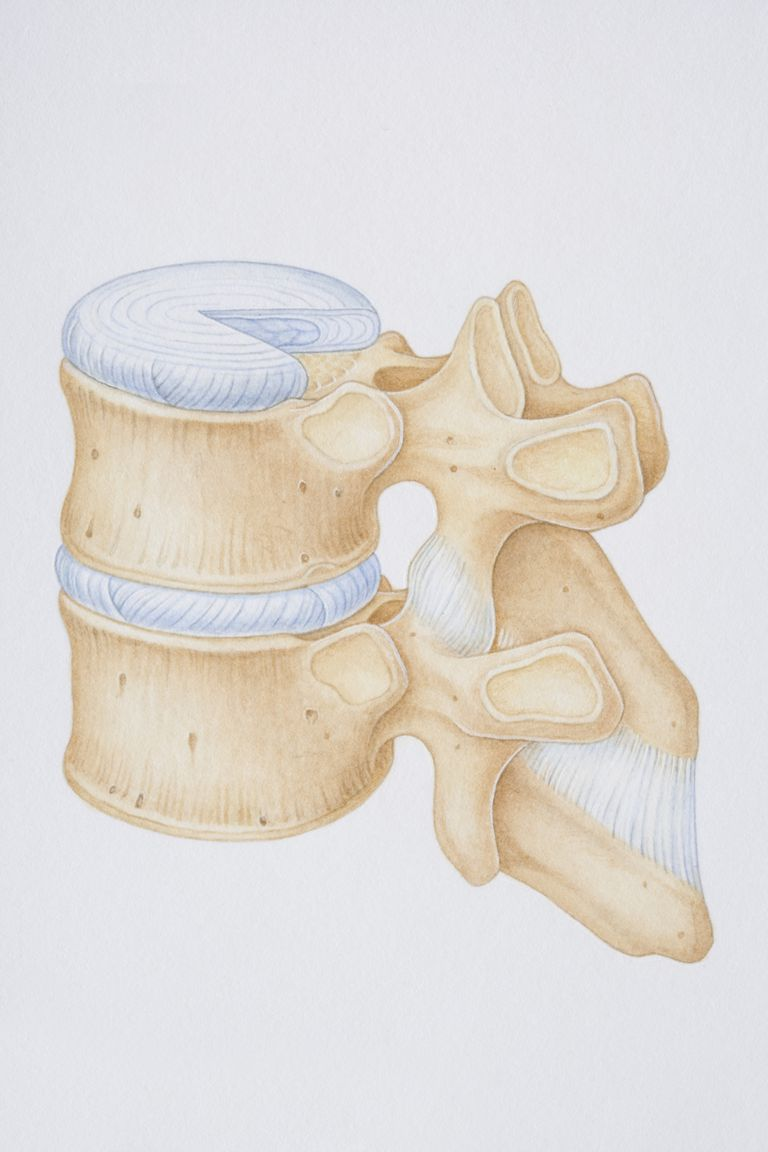Facet joint with capsule and intervertebral joint