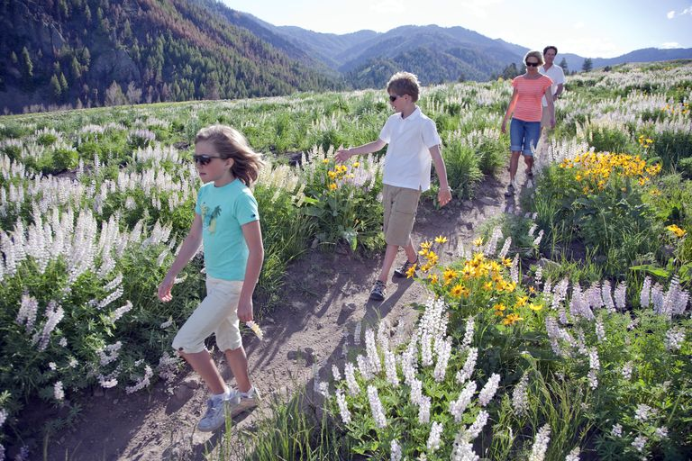 Family Walking Through Flowers in Idaho