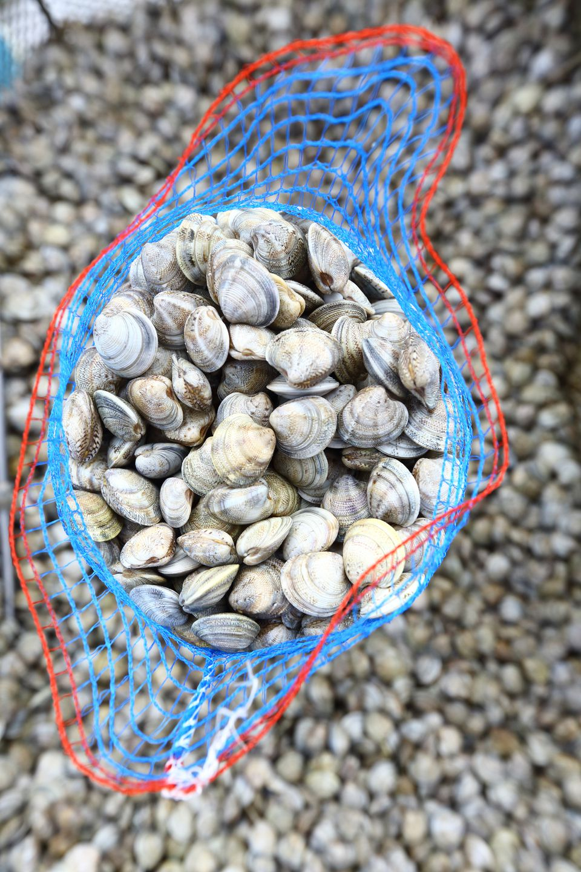Bag of clams