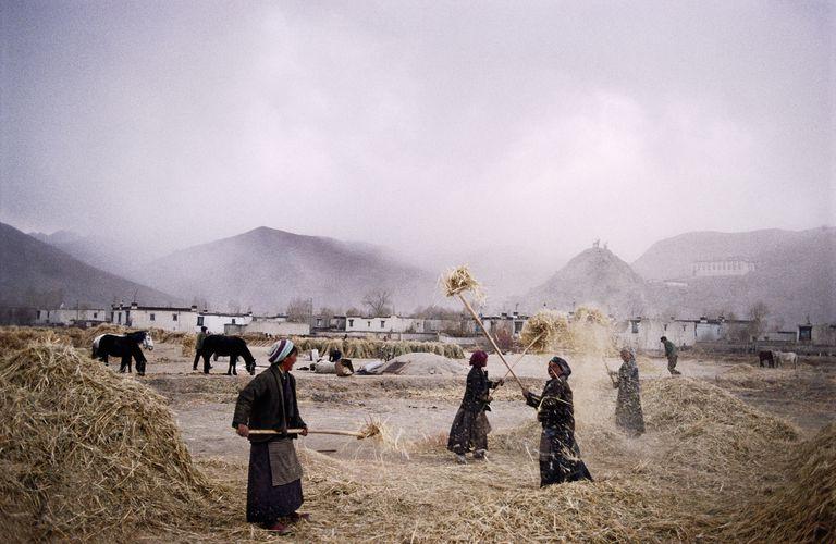 Tibet, Dongsa Village, farmers sifting wheat in field