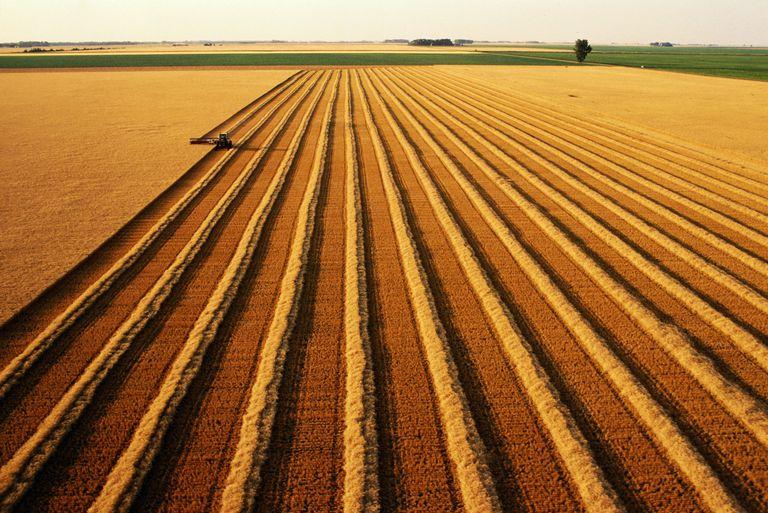 wheat_field_Andy_Sacks_Stone_Getty.jpg