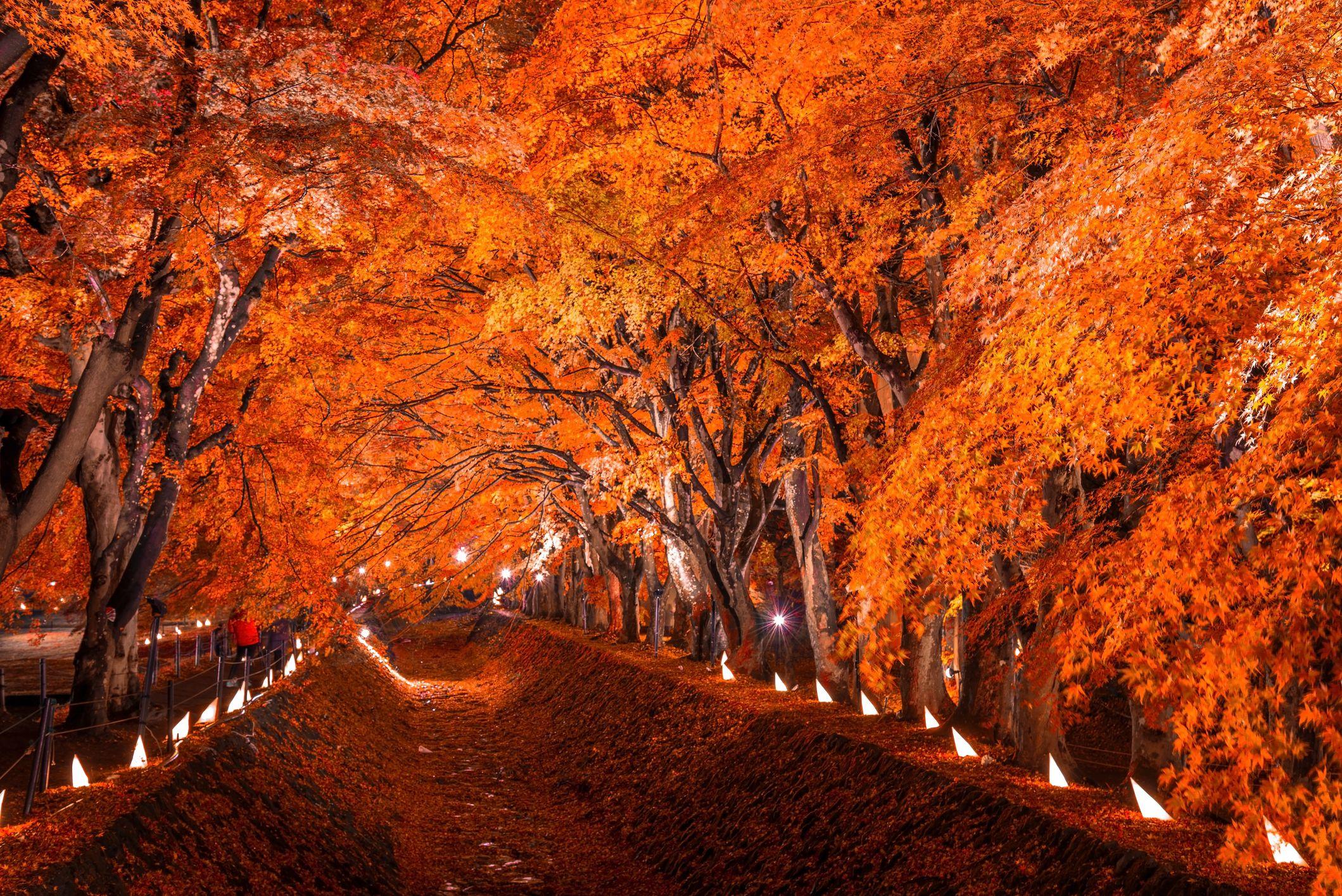 7 árboles que cambian el color de sus hojas
