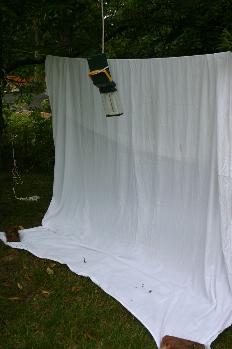You can make your own light trap for collecting night-flying insects.