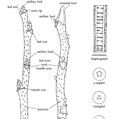 planting diagram for trees apple tree diagram wiring