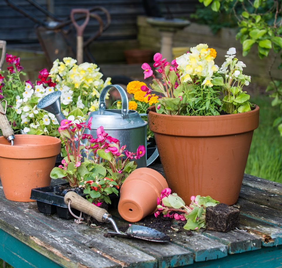 the basics of self watering containers