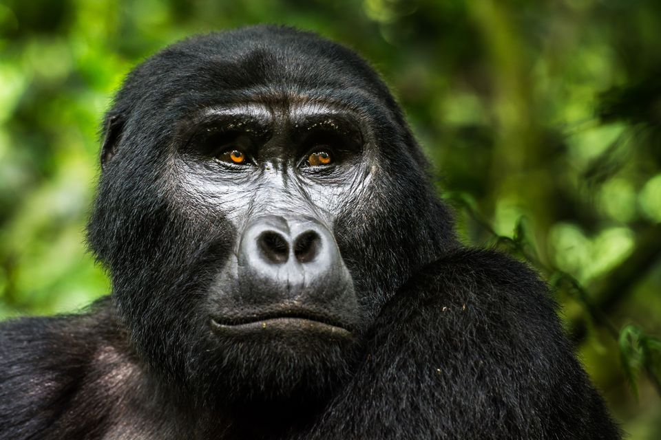 Uganda Travel Guide Essential Facts and Information