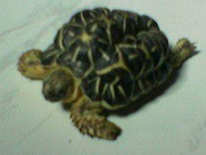 Tortoise - Jenny