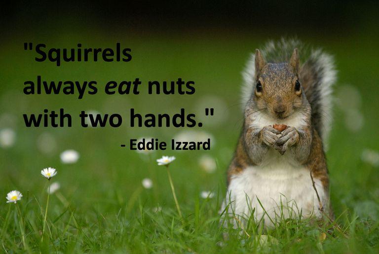 Squirrel with Eddie Izzard quote
