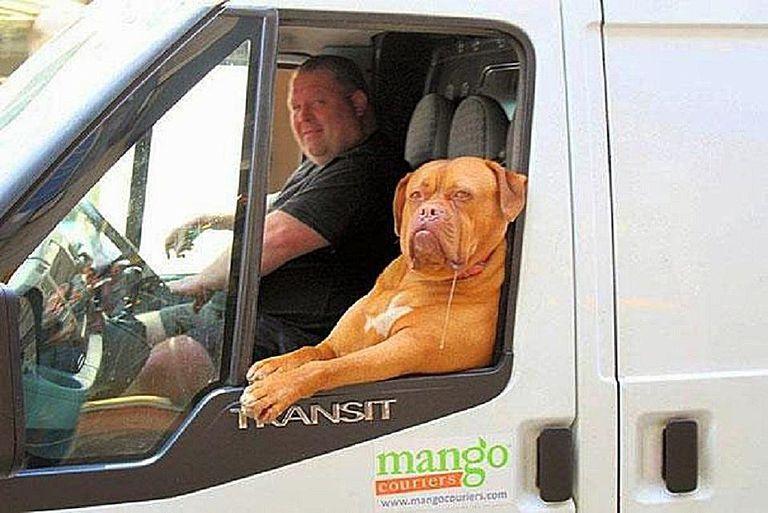 dog-truck2.jpg