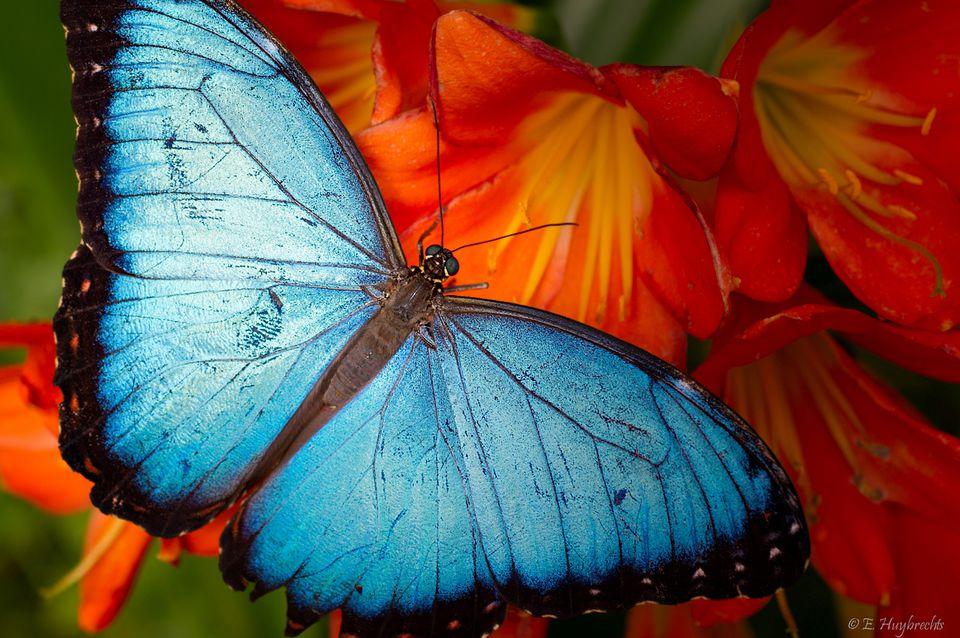montreal botanical gardens guide jardins botaniques de montreal