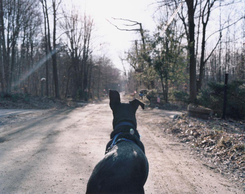 Dog Waiting on Road