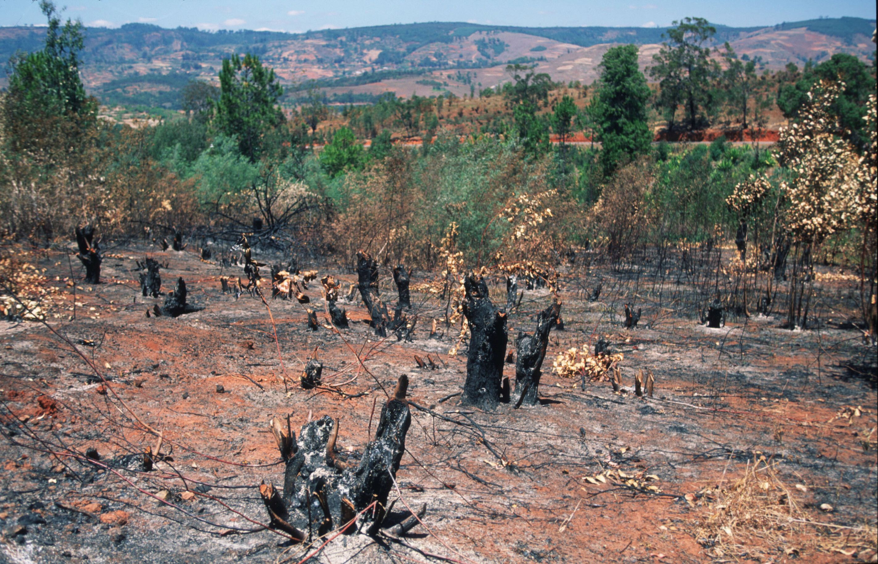 Slash and Burn: Economics and Environment of Swidden