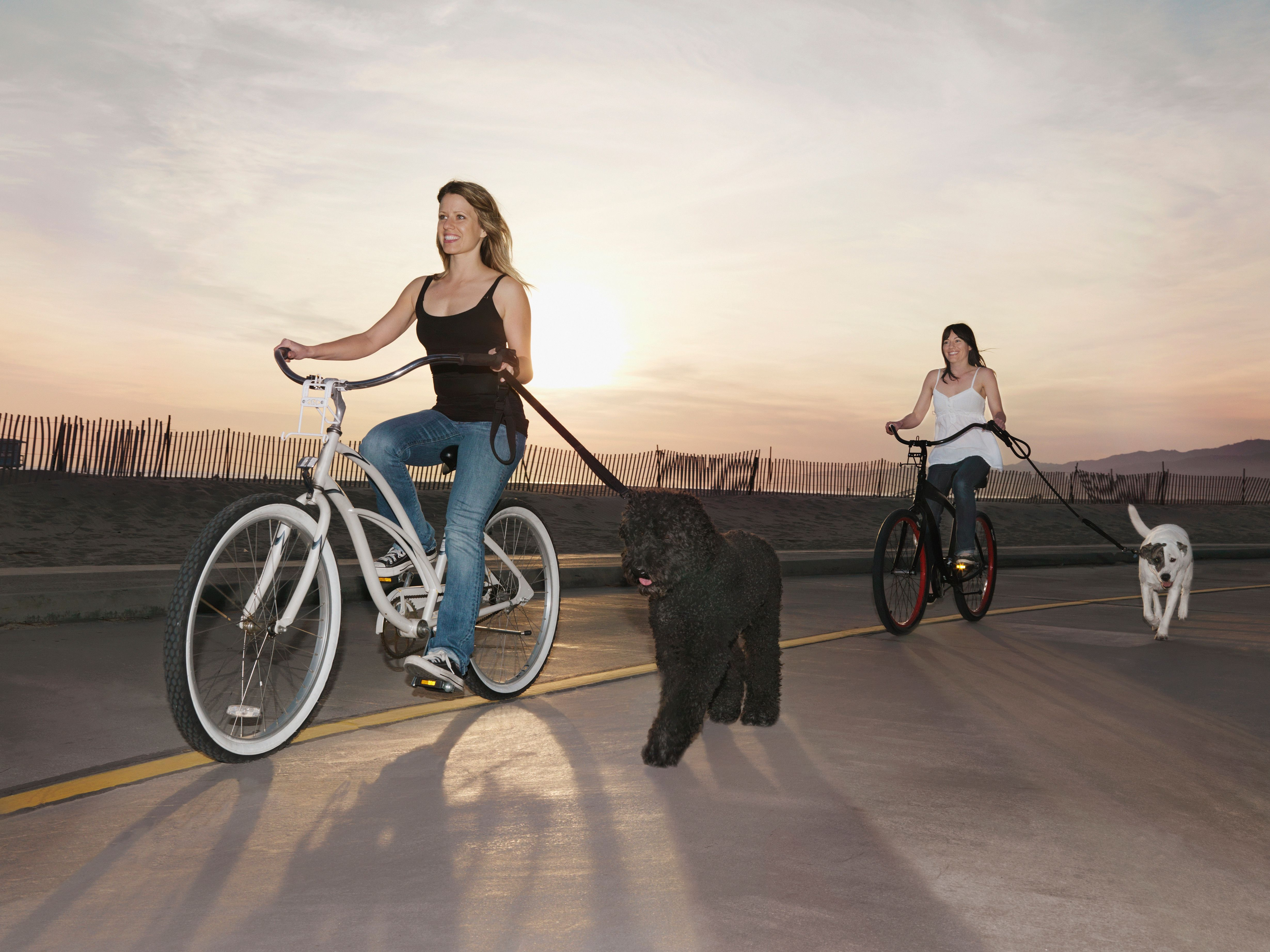 Riding A Bike With Your Dog