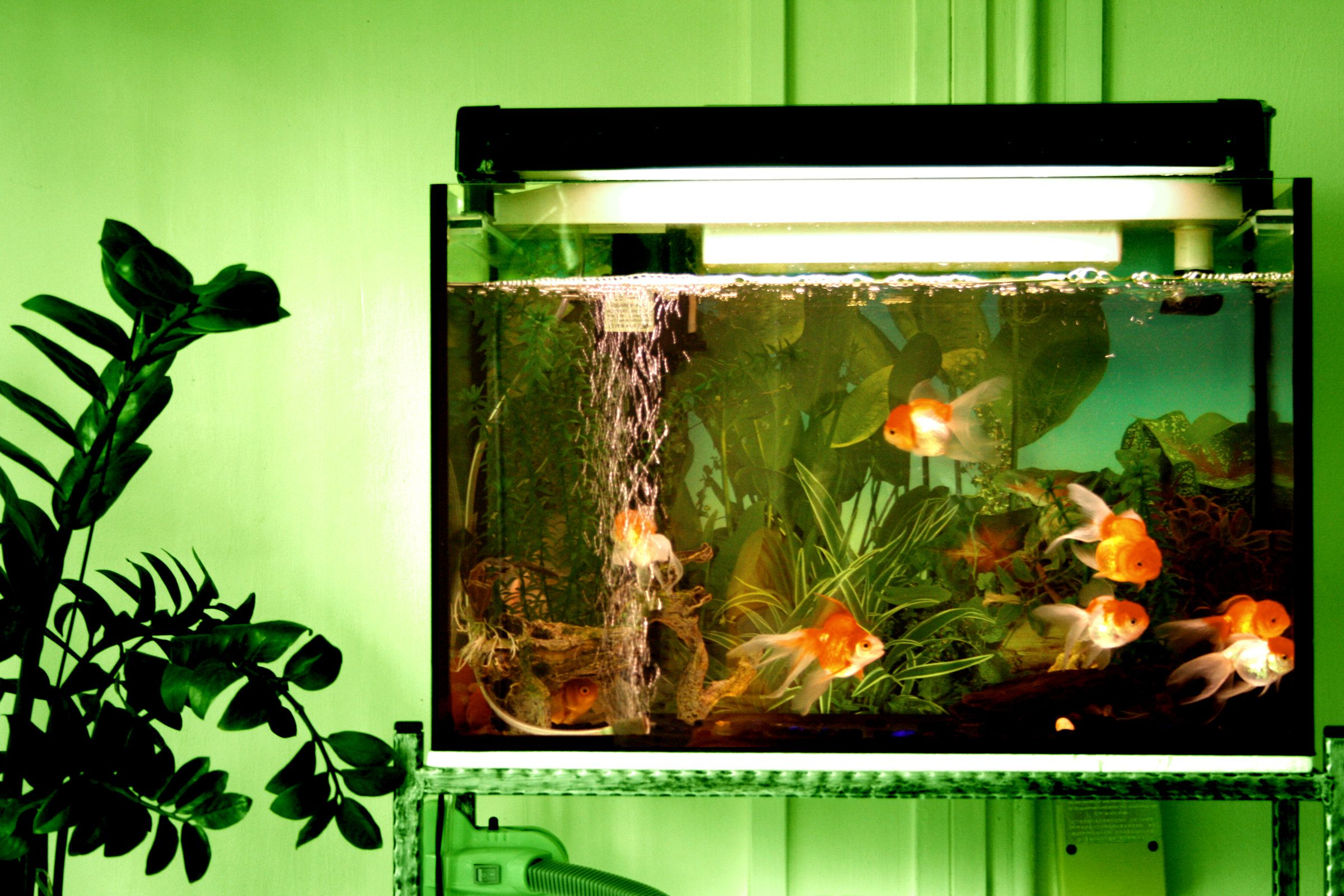 Growing out brine shrimp for fish food for How to decorate a fish tank with household items