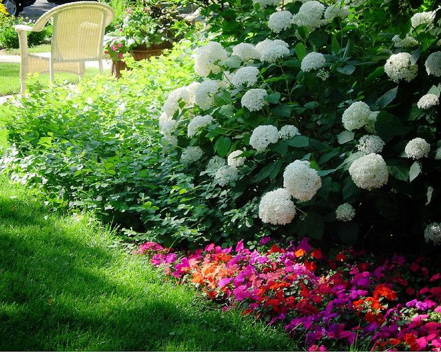 Top 10 Flowers For Shading Your Garden