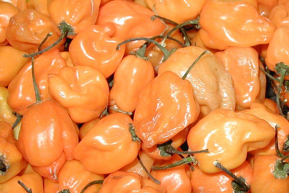 habanero-peppers_1000.jpg