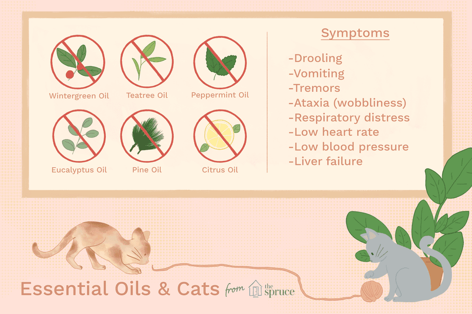 essential oils dangerous to cats