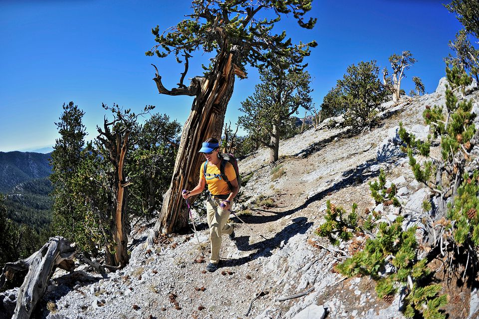 Young woman hiking, Mount Charleston Wilderness trail, Nevada, USA.