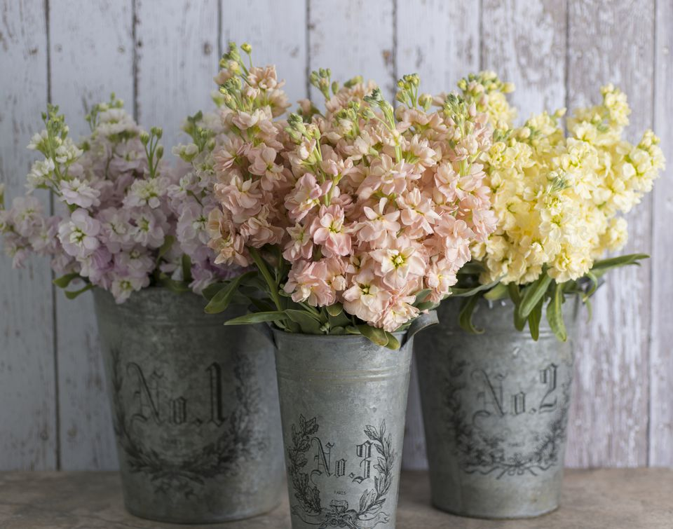Scented Stock Flowers in Zinc Buckets