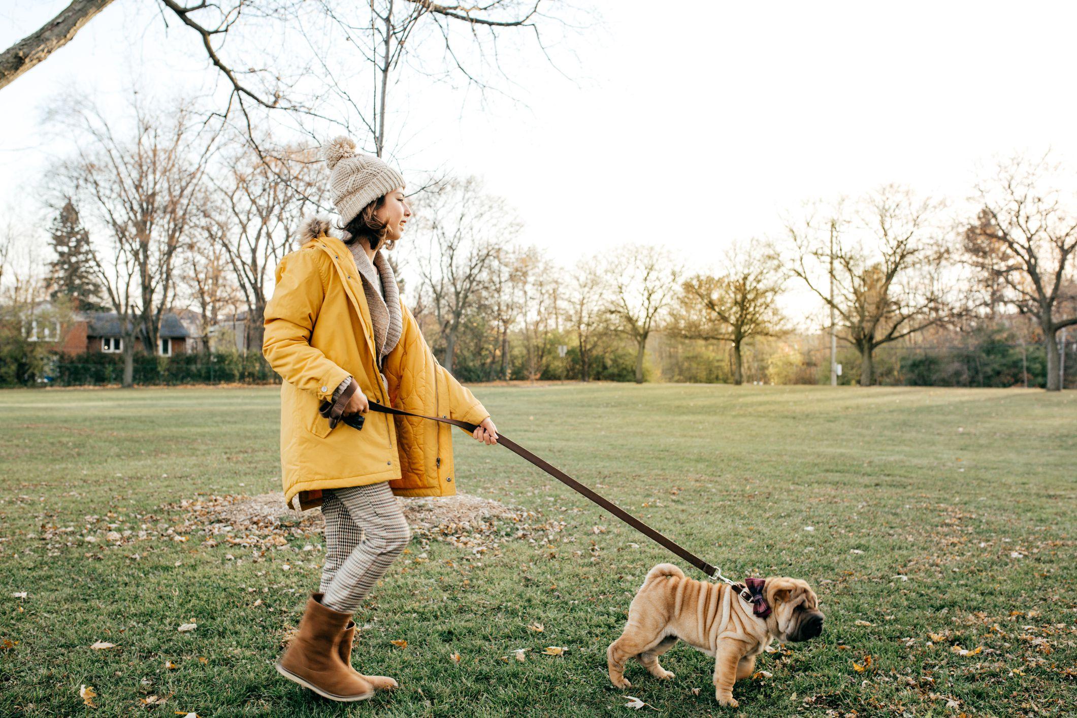 Dog Walking Costs Nyc
