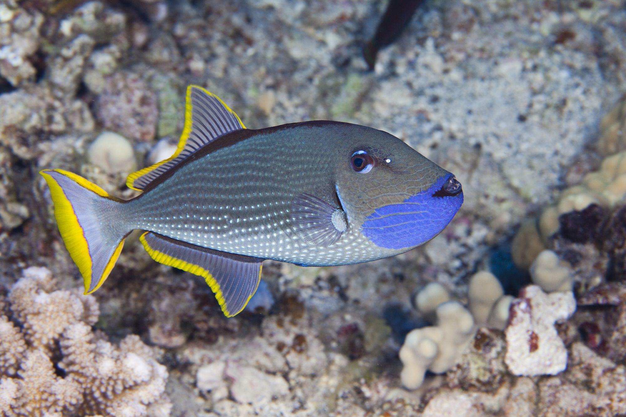 How to find cheap saltwater fish for your aquarium for Cheap aquarium fish