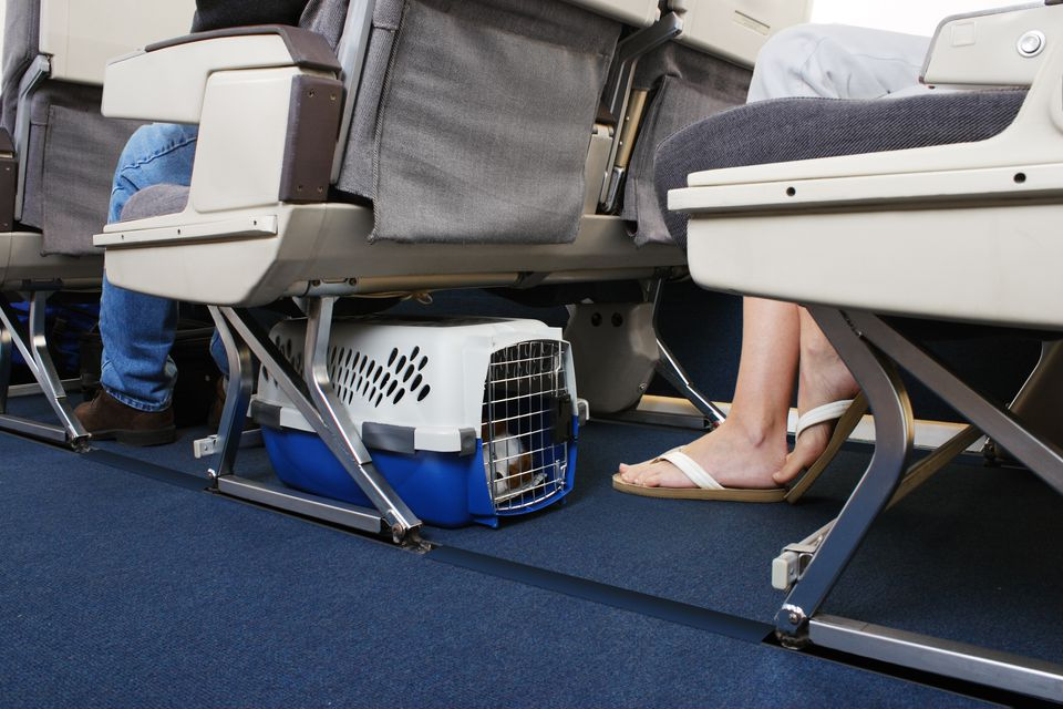 Pet on Airplane