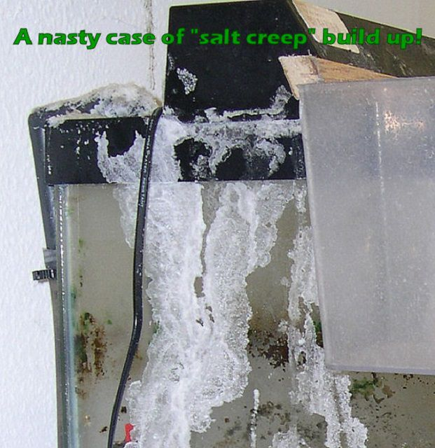 A Nasty Case of Salt Creep Build Up!