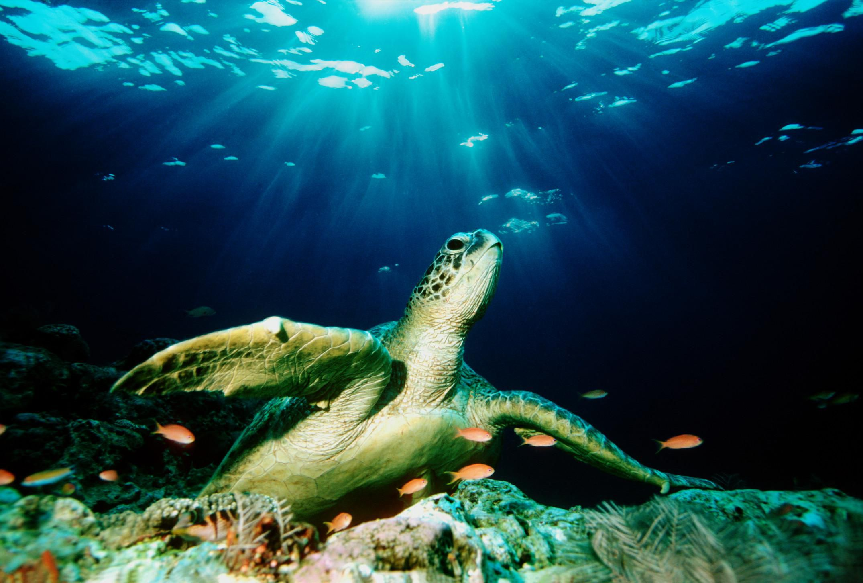Aquatic Veterinarian Career Profile