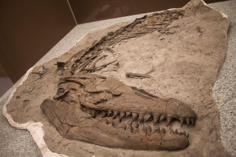 proganthodon