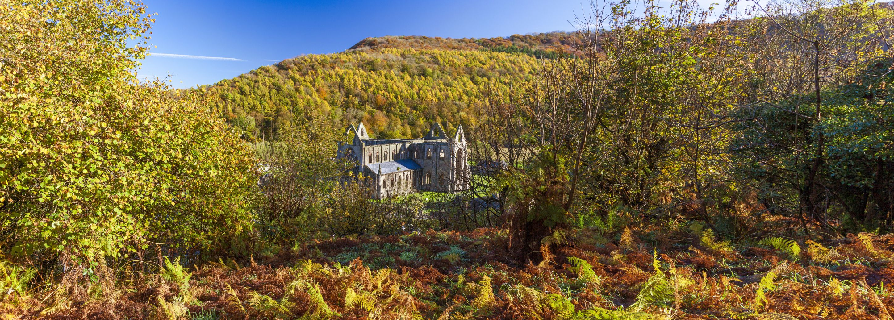 """natures role in tintern abbey A summary of """"tintern abbey"""" in william wordsworth's wordsworth's poetry learn exactly what happened in this chapter, scene, or section of wordsworth's poetry and what it means."""