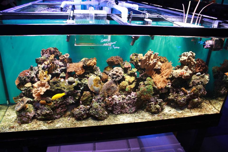 How to Find Cheap Saltwater Fish for Your Aquarium