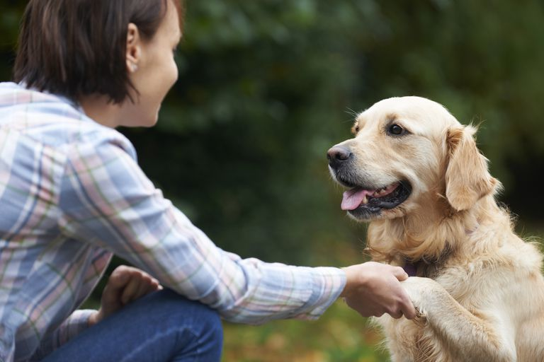 Woman training dog with operant conditioning