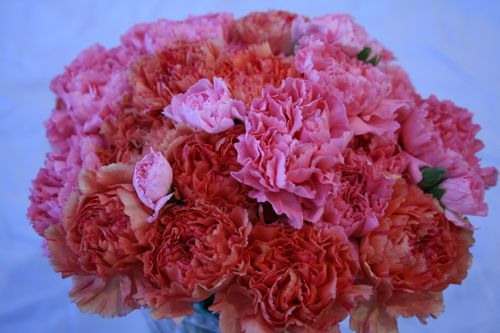 valentines day flowers, carnations, kids, children, sturdy, long lasting, inexpensive, cheap, party,