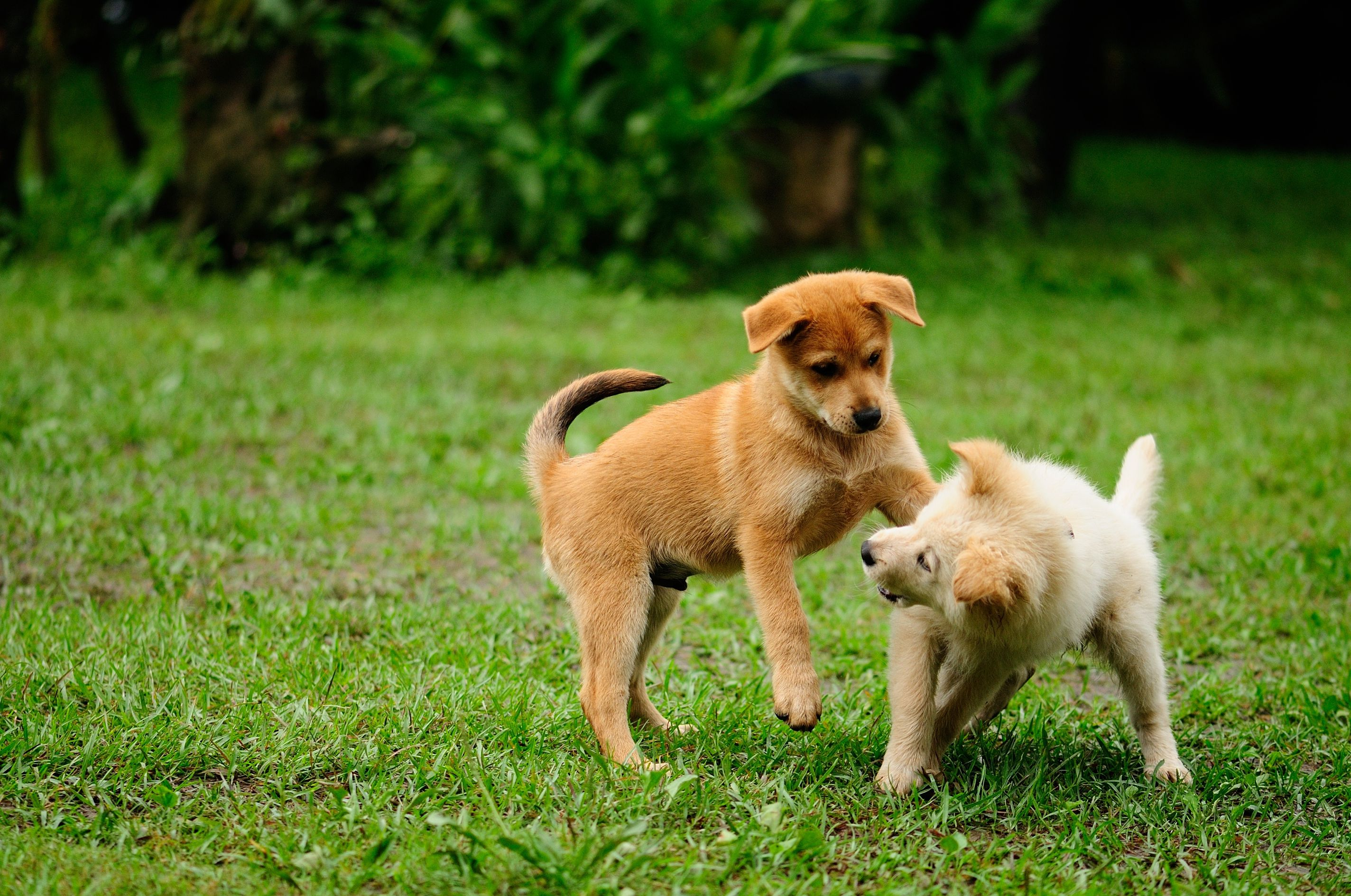 Dealing with puppy conflict and dominance aggression voltagebd Choice Image