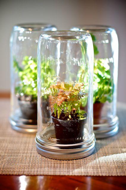 how to make a closed terrarium