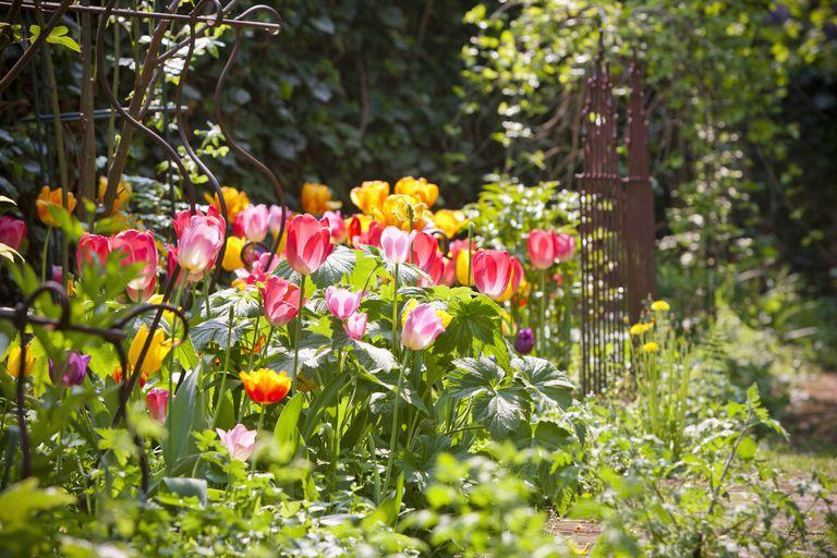 SpringFlowers2_1500