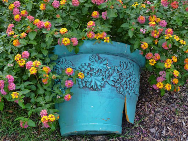 Broken blue pot with flowers